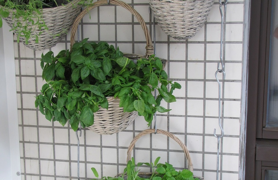 Healthy Herbs to Add to Meals